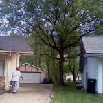 st-louis-tree-service-after
